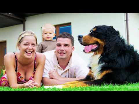 Fountain Hills Termite & Pest Control Services With Varsity