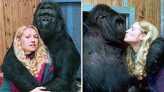 Девушка научила гориллу разговаривать и вот что из этого вышло…