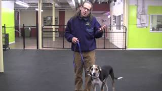 Remote Dog Training E-collar Introduction & Recall