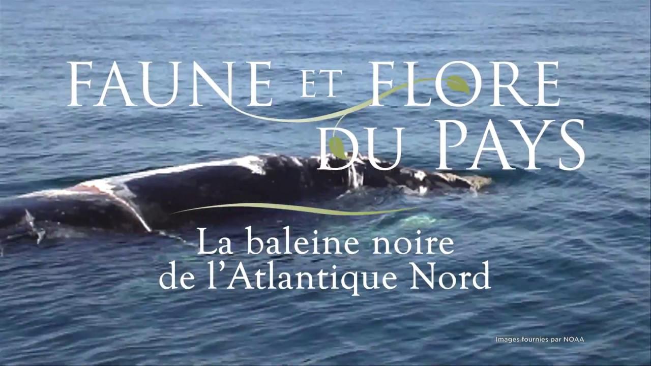 """Whale-Orca-Aquatique-OCEAN 4/""""W brodé Iron On Patch-Droit"""