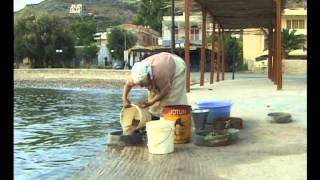 Know-how of cultivating mastic on the island of Chios