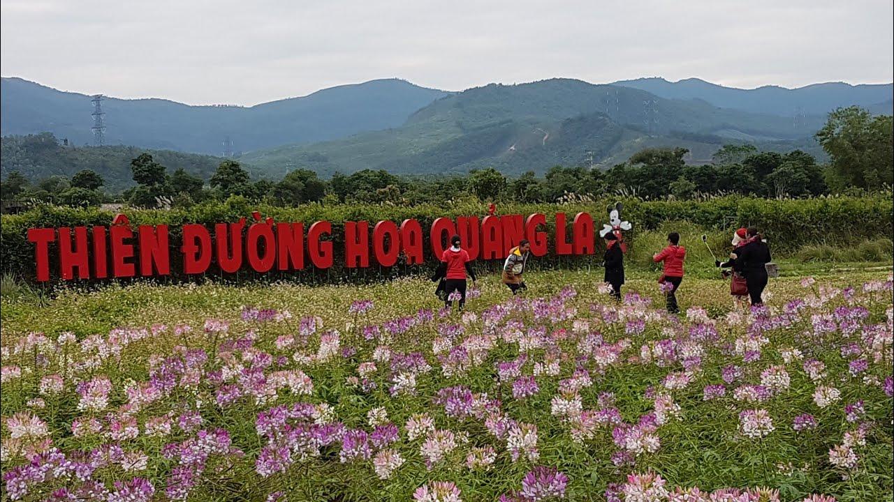 Thiên Đường Hoa Quảng La - Hoành Bồ - Quảng Ninh - YouTube