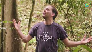 How Ecosia fights palm oil plantations