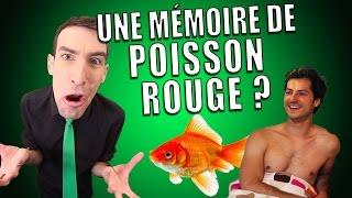 IDÉE REÇUE #11 : La mémoire du poisson rouge (feat. Nicolas Meyrieux) thumbnail