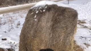 Round Bales Michigan Uncovered - What A Waste