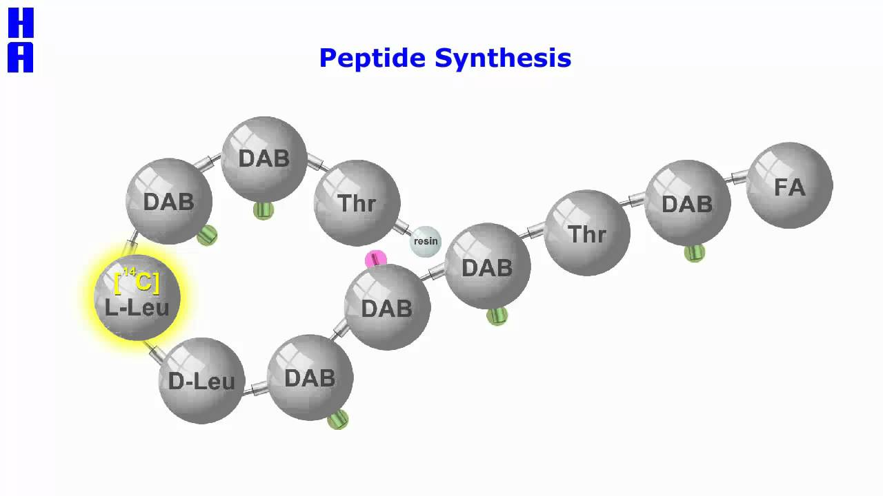 Peptide Synthesis - YouTube