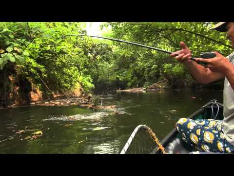 Papuan Black Bass Fishing part-2 with Gong Lei