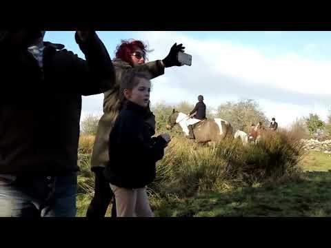 The North Galway Hunt In Killawalla (Video)
