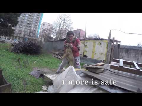 Rescue of 4 Bakudogs (Baku Street Dog Rescue)