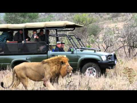 African Spirit Photo Safaris - Wild Dog