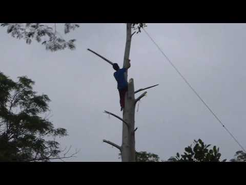 Bali ~ Ubud Region ~ Tree Felling Balinese Way ~ No HEALTH  & SAFETY