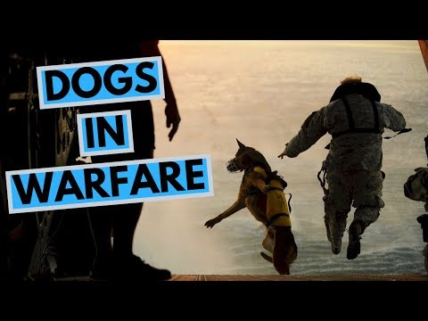 Dogs in Warfare - History, Purposes, Popular Military Breeds
