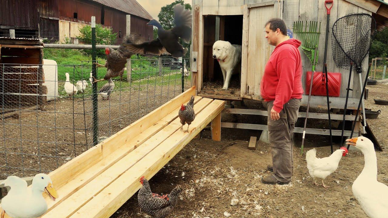 Building a Better Duck Ramp