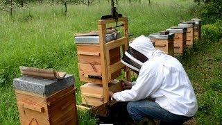 TÉMOIGNAGES - l'apiculture naturelle en ruche Warré - rucher école Villa le Bosquet
