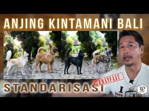 STANDARISASI  Anjing Kintamani Bali