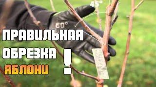 видео Обрезка яблонь