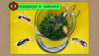 Флорариум со мхом в чайнике