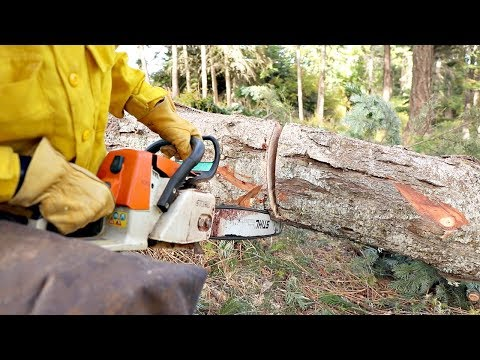 This Technique Could Save Your Chainsaw