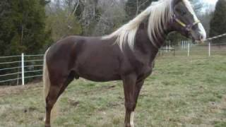Wild Eyed and Wicked-Rocky Mountain Stallion