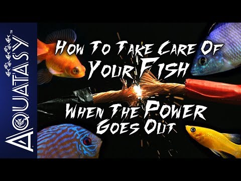 Aquatasy - How To Take Care Of Your Fish When The Power Goes Out