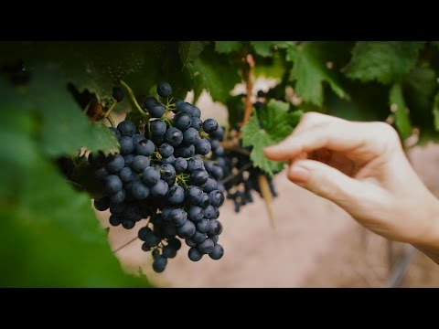 Argentina: Home Of Malbec Wines