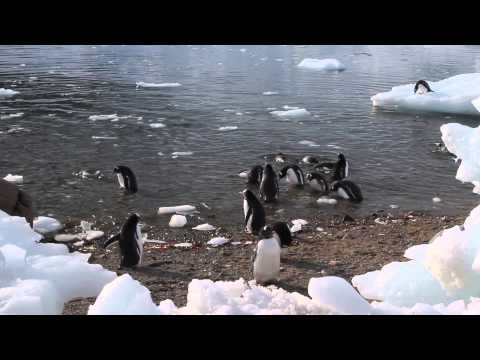 130313 Pinguins at Neko Harbour - ANTARCTICA