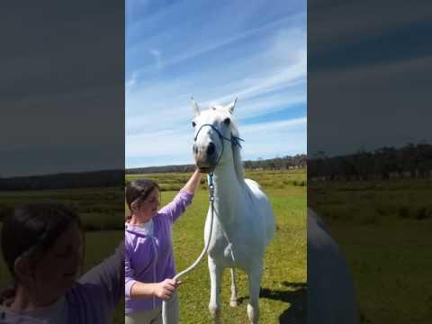 Storm the talking horse :-) :-) xx oo