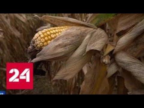 Европарламент запретил опасный гербицид глифосат - Россия 24