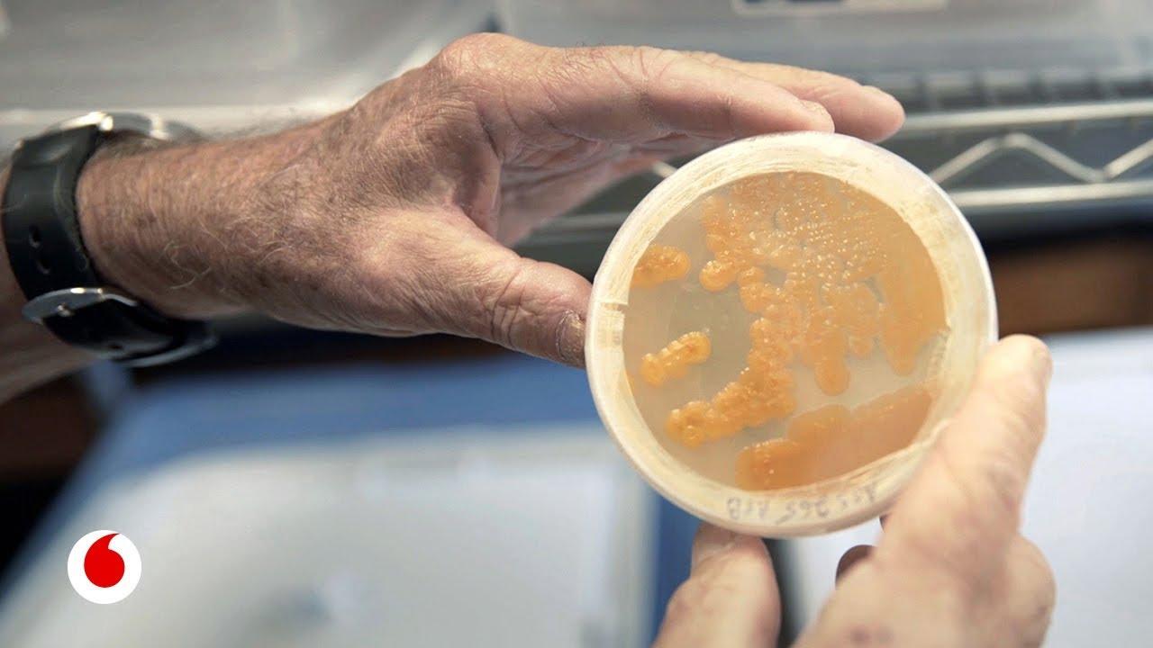 Los antibióticos del futuro están escondidos en el fondo del mar