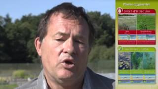 Halte à la prolifération des plantes aquatiques invasives
