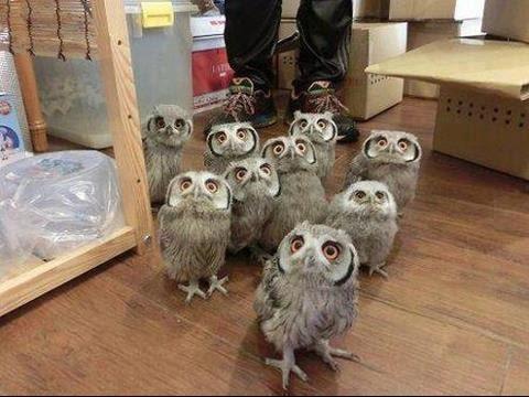 Cute Baby Owls - YouTube