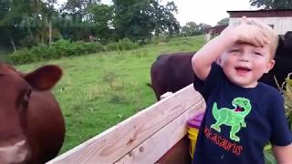 Funny kids and toddlers playing with farm animals