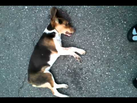 Dog Gets Hit By Car Video