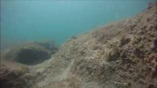 HD Huge Nurse Shark: Free-diving at Bathtub Reef, Stuart Florida 8-12-12