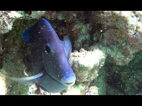 Bahia Principe Snorkeling – Riviera Maya Mexico – YouTube HD