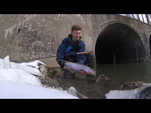Epic Erie Steelhead Fishing on the Fly