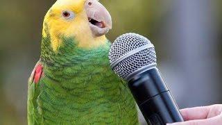 Попугаи любят петь