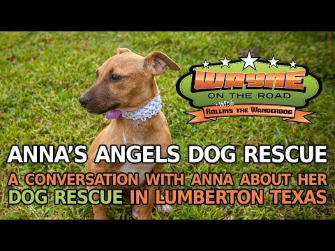 Anna's Angels Dog Rescue - YouTube
