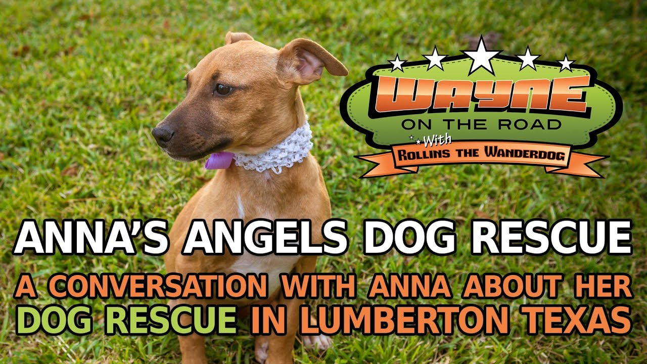 Anna's Angels Dog Rescue
