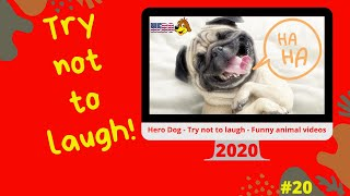 Hero Dog - Try not to laugh - Funny animal videos 2020 #20