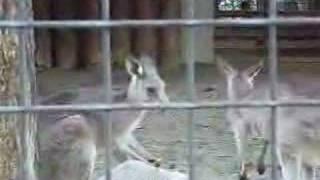 上野動物園.