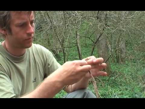How to make string in nature