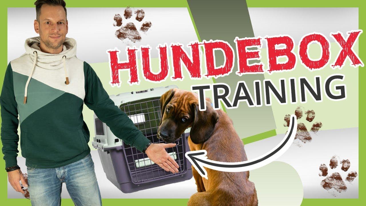 Hundebox   Eingewöhnung, Training, Verwendung