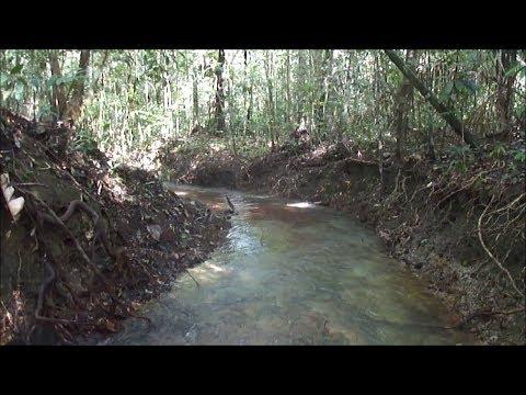 Floresta Amazônica uma aventura! Trilha até a nascente.