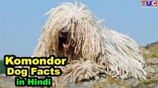 Komondor dog Facts in Hindi : Popular Dog Breeds : TUC