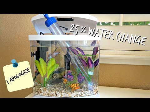 25% WATER CHANGES | HOW TO BETTA