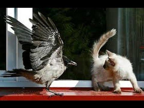 Анекдоты про животных » Приколы. Фото приколы. Видео