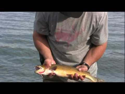 "Yellowstone National Park / 22"" Yellowstone Cutthroat Trout"