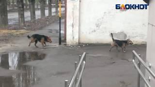 Люди боятся бродячих собак в Волжском