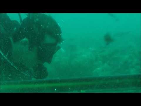 Spearfishing offshore Charleston Big Goliath grouper